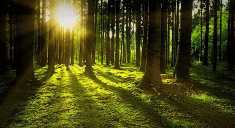 лес солнце
